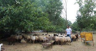 Ahmet Yesevi Mahallesi Adak kurban satış yeri