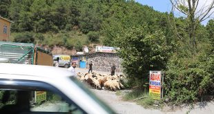 Kurtköy Mahallesi Adak Kurban Satış Yeri